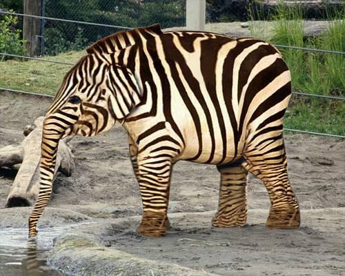 http://elephant051.e.l.pic.centerblog.net/9q9ejgck.jpg